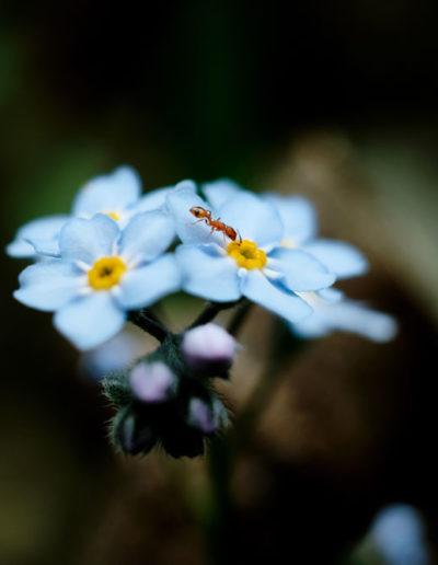 Macro fourmi sur fleur par Damien Lejosne